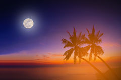 Silhouette coconut palm trees on beach with the moon Royalty Free Stock Photo