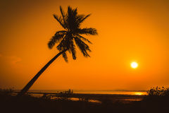 Silhouette coconut palm trees on beach Stock Photo