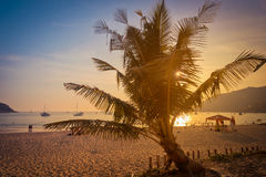 Silhouette coconut palm trees on beach at sunset in Phuket Stock Images