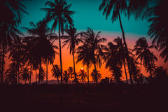 Silhouette coconut palm trees on beach at sunset. Royalty Free Stock Image