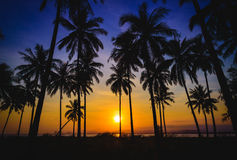 Silhouette coconut palm trees on beach at sunset. Stock Image