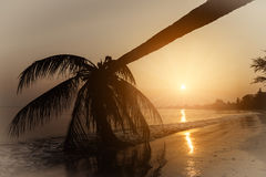 Silhouette coconut palm trees on beach at sunset. Stock Photography