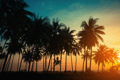 Silhouette coconut palm trees on beach at sunset. Vintage tone Stock Images