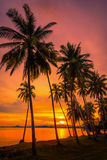 Silhouette coconut palm trees on beach at sunset. Vintage tone Royalty Free Stock Image