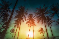 Silhouette coconut palm trees on beach at sunset. Stock Photos