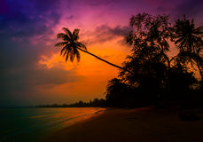 Silhouette coconut palm trees on beach at twilight. Royalty Free Stock Image