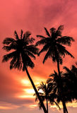 Silhouette of coconut palm trees on colorful sun set Stock Photography