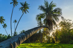 Silhouette coconut palm trees near the beach Stock Image