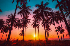 Free Silhouette Coconut Palm Trees On Beach At Sunset. Royalty Free Stock Photo - 78878175