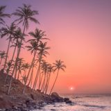Silhouette of palm trees and shore during sunset. Silhouette of coconut palm trees and Sri Lanka shore during purple sunset Stock Images