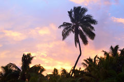 Silhouette of coconut palm trees during sunrise Stock Photo