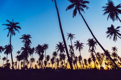 Silhouette coconut palm trees with sunset. Silhouette coconut palm trees with sunset and flare sky background royalty free stock images
