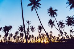 Silhouette coconut palm trees with sunset. Silhouette coconut palm trees with sunset and flare sky background stock images