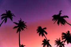 Silhouette coconut palm trees with sunset. Silhouette coconut palm trees with sunset and flare sky background royalty free stock photo