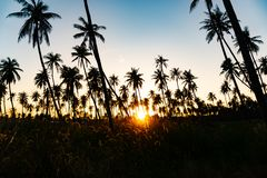 Silhouette coconut palm trees with sunset. Silhouette coconut palm trees with sunset and flare sky background stock photography
