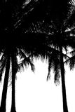 Silhouette  coconut tree Royalty Free Stock Images