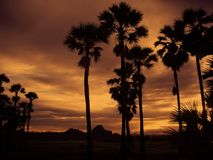 Silhouette of Coconut Tree during Cloudy Day Stock Photos