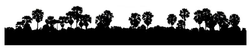 Silhouette of  coconut tree with panorama Stock Photo