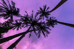 Silhouette coconut tree Stock Photography