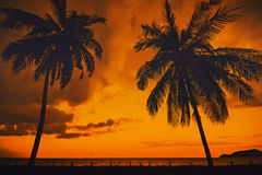 Silhouette of coconut tree Royalty Free Stock Photography