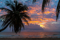 Silhouette of coconut tree with sea and beach view in the morning Royalty Free Stock Images