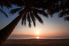 Silhouette of coconut tree slope down to the beach on sunrise background, Chumporn province. South of Thailand Stock Photo