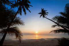 Silhouette of coconut tree slope down to the beach on sunrise background, Chumporn province. South of Thailand Stock Photography