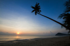 Silhouette of coconut tree slope down to the beach on sunrise background, Chumporn province. South of Thailand Royalty Free Stock Photos