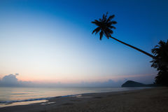 Silhouette of coconut tree slope down to the beach on sunrise background, Chumporn province. South of Thailand Royalty Free Stock Image