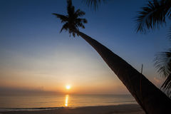 Silhouette of coconut tree slope down to the beach on sunrise background, Chumporn province. South of Thailand Stock Photos
