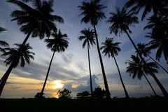 The silhouette coconut tree with sun rise Stock Images