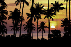 Silhouette coconut tree at sunset Stock Photography