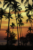 Silhouette coconut tree at sunset Stock Photo