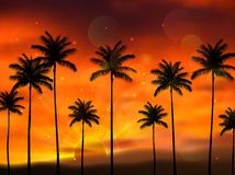 Silhouette of coconut tree when of sunset Stock Photography