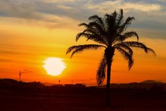 Silhouette coconut tree in time sunset beautiful colorful landscape in blue sky evening nature twilight.  Royalty Free Stock Image