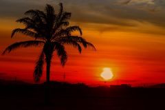 Silhouette coconut tree in time sunset beautiful colorful landscape in blue sky evening nature twilight.  Royalty Free Stock Photo