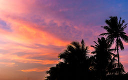 Silhouette of coconut tree in twilight sky with colorful sunset Royalty Free Stock Images