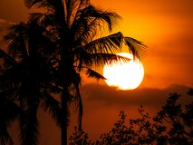 The Silhouette Coconut Trees royalty free stock image