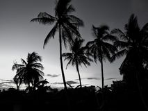 Silhouette coconut trees during sunset .black and white concept stock photo