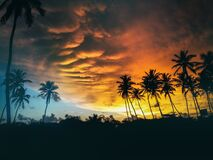 Silhouette of Coconut Trees Under Dark Clouds during Golden Hours Royalty Free Stock Photography