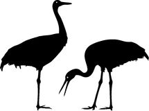 Silhouette of Common Crane Royalty Free Stock Photos