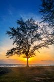 Silhouette concept ,Silhouette of trees at sunset on the beach sunset time. stock photo