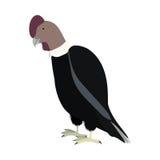 Silhouette condor animal bird icon. Illustration Royalty Free Stock Image