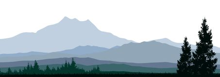 Silhouette of coniferous forests for you design Stock Photos
