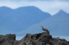 Silhouette écossaise de montagne d'île, avec l'oiseau chanteur sur la roche Photos stock