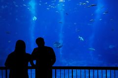 Silhouette couple in front of an aquarium stock photo