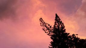 Silhouette couple of pine trees. Silhouette couple of pine trees Royalty Free Stock Photos