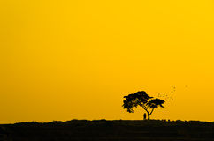 Silhouette Couple and tree. Royalty Free Stock Image