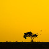 Silhouette Couple and tree. Stock Image