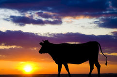 Silhouette of a cow Stock Photo